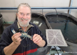 Purged Yabby ready for sale